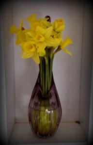 My Mums Daffodils